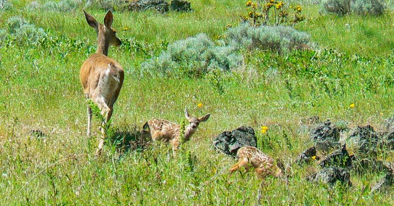 Wildlife near Ashland, Oregon