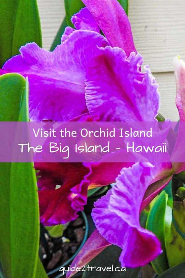 Visit the Orchid Island -- the Big Island Hawaii