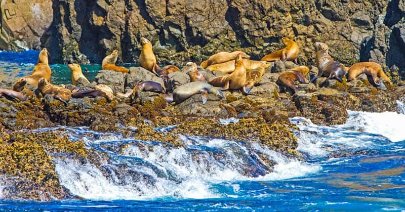 5 of the Best Islands in the U.S. for a Wildlife Vacation