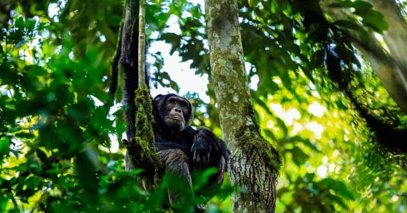 Visit the Pearl of Africa – Trekking in Uganda