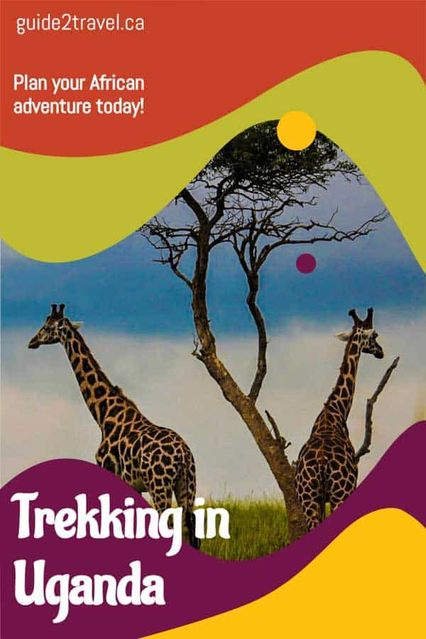 Discover nature in the wild when you're trekking in Uganda!