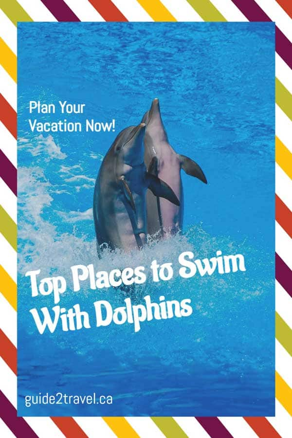 Top places to swim with dolphins