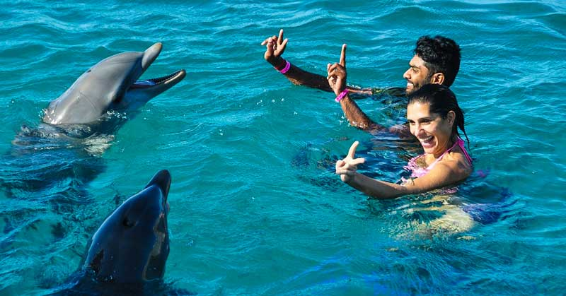 Top Places in the World to Swim With Dolphins
